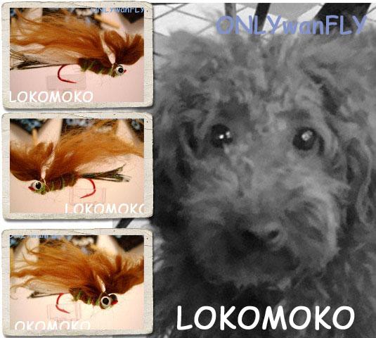 LOKOMOKOall_edited-1.jpg